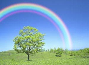 rainbow-3-256brex